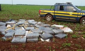 Polícia Civil desativa depósito de maconha em bairro de Dourados