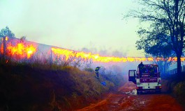 Trem com 57 vagões de celulose que saiu de Três Lagoas pega fogo