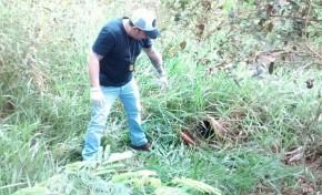Cabeça de jovem assassinado é encontrada em Caarapó