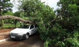 Chuva provoca queda de árvore na Capital