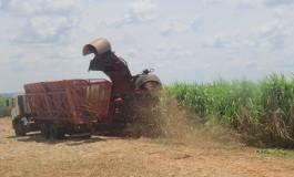 MS processa 3 milhões de toneladas de cana-de-açúcar na segunda quinzena de outubro