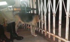 Bombeiros resgatam cachorro preso com cabeça em grade