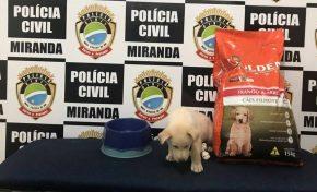 """Delegacia de Miranda ganha um integrante """"bom pra cachorro"""""""