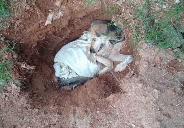 Crueldade: idoso é flagrado enterrando cachorro vivo