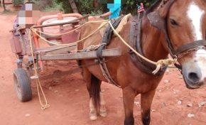 Carroceiro é flagrado pela PMA praticando maus-tratos a cavalo em Aquidauana