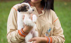 CCZ da Capital é autorizado a disponibilizar fotos de animais para adoção na internet