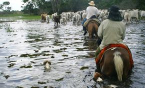 Pantanal espera enchente rigorosa para 2018