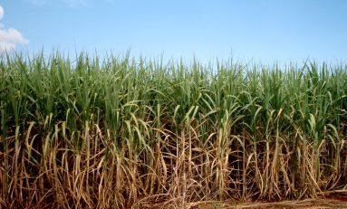 Setembro chuvoso atrasa moagem de cana-de-açúcar em MS