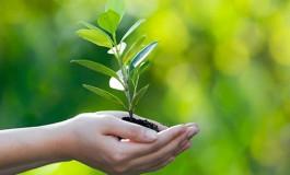 Dia da Árvore é marcado com distribuição de mudas na Capital