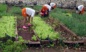 Cursos em diferentes áreas garantem capacitação a reeducandas de Corumbá