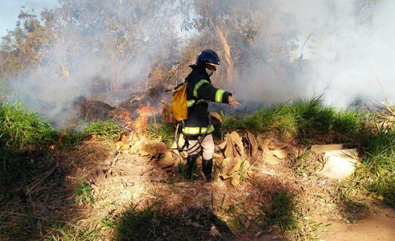 Previsão de geada em MS deixa Bombeiros em alerta para aumento de incêndios florestais