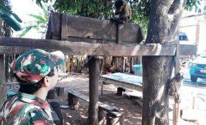 Macaco-prego é encontrado acorrentado em fazenda