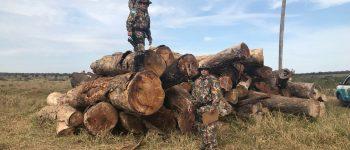 PMA multa fazendeiro em mais de R$ 500 mil por armazenar madeiras sem autorização