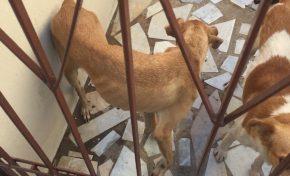 """""""São assim mesmo"""", diz homem preso sobre animais em situação de maus-tratos"""