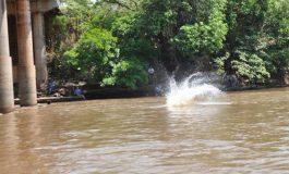Mesmo com morte recente no rio Aquidauana, banhistas ignoram perigo