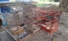 PMA autua campeiro de fazenda por manter aves silvestres ilegalmente em cativeiro