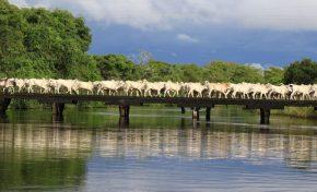 Pantanal: Governo e produtores apostam em sustentabilidade para fortalecer pecuária