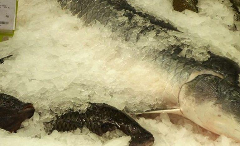 Preço de pescado chega a variar 200%, aponta pesquisa do Procon-MS