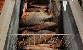 Mulher usa rede social para vender pescado ilegal e acaba presa
