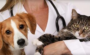 Atendimento médico veterinário domiciliar é regulamentado por CRM/MS