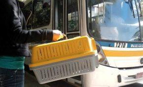 Agora é lei: animais de estimação poderão embarcar junto com donos em ônibus de MS