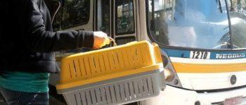Animais de estimação podem passear com donos em ônibus no MS