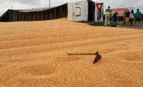 Carga de milho é saqueada e motorista é furtado após acidente em rodovia de MS