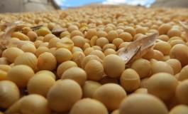 Produtores já semearam 76% da área de soja em Mato Grosso do Sul
