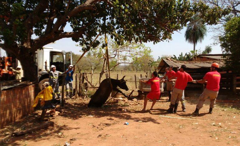 Bombeiros resgatam vaca em fossa de propriedade rural